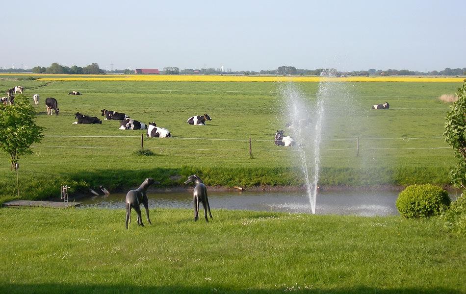 Foto Wiesen, Kühe und Rapsfelder
